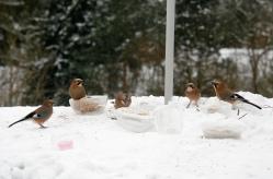 Nøtteskrikene hadde møte rundt fôrskålene.