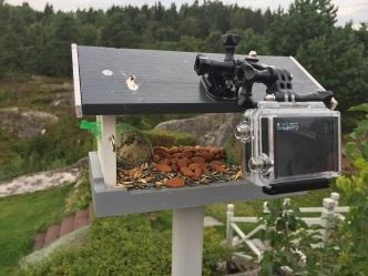Gopro har vært brukt flere ganger på fôringsplassen. Det har gitt både bilder og film.